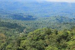 Vista de la selva tropical tropical con un camino y tres casas visibles en la distancia fotos de archivo