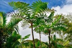 Vista de la torre del EL Yunque, selva tropical fotos de archivo