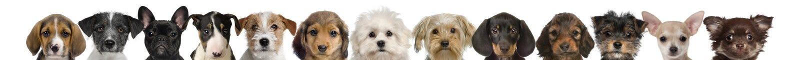 Vista de las cabezas del perrito Imagenes de archivo