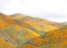 Vista de las colinas a lo largo de Walker Canyon en la floración estupenda de Elsinore del lago fotos de archivo libres de regalías