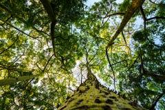 Vista de las coronas de un árbol y del tronco de un árbol con las espinas dorsales en el parque de Turia valencia imágenes de archivo libres de regalías