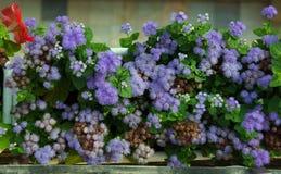 Vista de las flores azules florecientes Foto de archivo