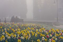 Vista de las flores coloridas agradables Fotografía de archivo libre de regalías