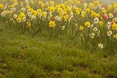Vista de las flores coloridas agradables Fotografía de archivo
