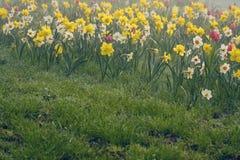 Vista de las flores coloridas agradables Imagen de archivo