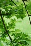 Vista de las hojas verdes Imagen de archivo libre de regalías
