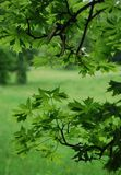 Vista de las hojas verdes Imagen de archivo