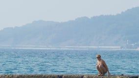 Vista de las islas en la bahía Tiro del Telephoto la mujer en el rompeolas mira la costa en la niebla, 4k, lento almacen de video