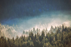 Vista de las montañas brumosas de la niebla en otoño Fotografía de archivo