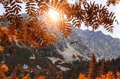 Vista de las montañas a través del follaje del otoño Foto de archivo