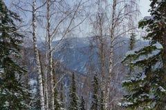 Vista de las montañas a través de los árboles Imagen de archivo