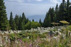Vista de las piedras grandes del granito del río de piedra en el río rocoso a distancia en montaña del parque nacional de Vitosha Imagenes de archivo