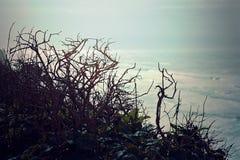 Vista de las ramas del mar, vista al mar pacífica de niebla de desatención Imágenes de archivo libres de regalías