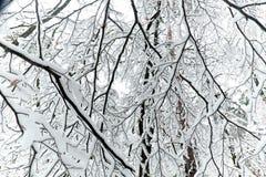 Vista de las ramas en un bosque en invierno con nieve Fotografía de archivo