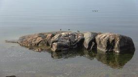Vista de las rocas costeras del golfo de Finlandia, Hanko almacen de metraje de vídeo
