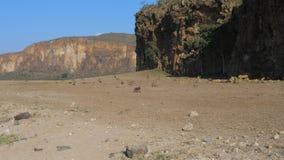 Vista de las rocas hermosas en el valle adonde los monos caminan metrajes