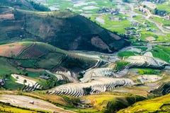 Vista de las terrazas del arroz vistas de un pico de montaña Foto de archivo libre de regalías