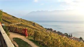 Vista de las terrazas de Lavaux, del lago Léman y de las montañas en el fondo, Suiza foto de archivo