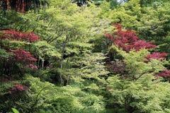 Vista de los árboles de arce verde y rojo Foto de archivo libre de regalías