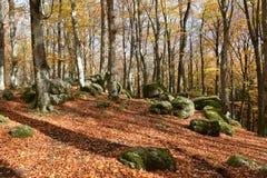 Vista de los árboles de haya y de las piedras volcánicas foto de archivo