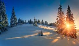 Vista de los árboles nevados de la conífera en la salida del sol El fondo de la Feliz Navidad o del Año Nuevo Foto de archivo libre de regalías