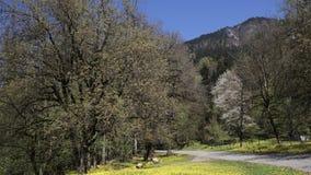 Vista de los árboles y del pequeño camino rural que eso lleva a las montañas nevadas almacen de video