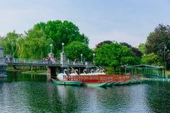 Vista de los barcos y del puente del cisne sobre el lago en el jardín público de Boston, con los locals disfrutando de un día del foto de archivo libre de regalías