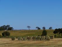 Vista de los campos de hierba australianos Fotos de archivo libres de regalías