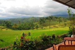 Vista de los campos del arroz Fotos de archivo