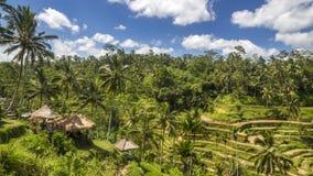 Vista de los campos del arroz en Bali Fotos de archivo