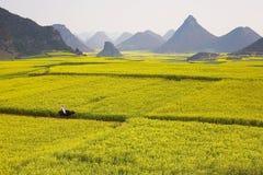 Vista de los campos del col Imagen de archivo libre de regalías