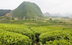Vista de los campos del té Imagenes de archivo