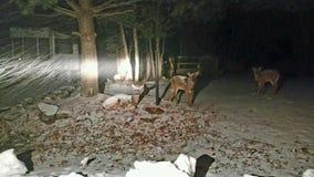Vista de los ciervos foto de archivo libre de regalías