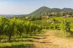 Vista de los viñedos de Prosecco durante verano Imagenes de archivo