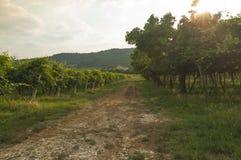 Vista de los viñedos famosos del valpolicella, Véneto, Italia Fotos de archivo