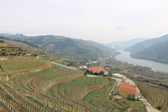 Vista de los viñedos que pasan por alto el río del Duero - Portugal Foto de archivo libre de regalías