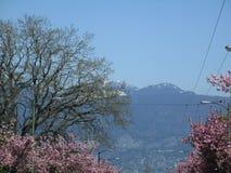Vista de maiores montanhas do ` s Northshore de Vancôver com as flores de cerejeira cor-de-rosa no primeiro plano, Columbia Britâ fotos de stock