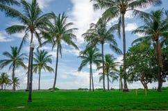 Vista de Miami Beach con las palmeras Imagenes de archivo