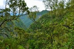A vista de montanhas verdes e as cidades ajardinam, Portugal, Madeira Imagens de Stock