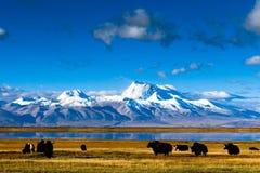 Vista de Naimona'nyi máximo por Huo'erxiang Fotos de Stock Royalty Free