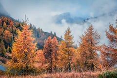 Vista de niebla fantástica de las montañas de la dolomía con los árboles de pino amarillo fotografía de archivo