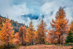 Vista de niebla fantástica de las montañas de la dolomía con los árboles de pino amarillo imagen de archivo