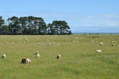 Vista de Nueva Zelanda Imagenes de archivo