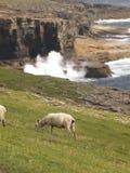 Vista de Orkney 1 Imagenes de archivo