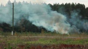 Vista de peligros para el medio ambiente - bosque ardiendo almacen de metraje de vídeo