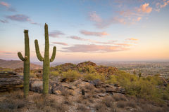 Vista de Phoenix com cacto do Saguaro Fotografia de Stock Royalty Free