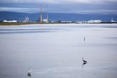 A vista de Poolbeg eleva-se de Clontarf em Dublin com as garças-reais no primeiro plano Imagens de Stock Royalty Free