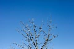 Vista de ramas naturales foto de archivo