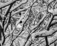 Vista de ramas y de los posts nevados de la lámpara Imagen de archivo