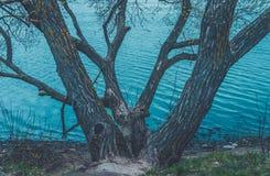 Vista de restauración del lago ancho con agua azul pedregosa de la orilla y del claro Puente sobre el río Árboles cerca del agua imagen de archivo libre de regalías